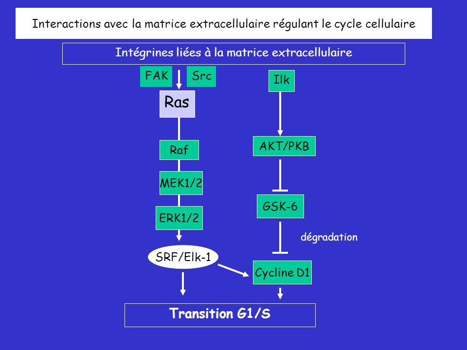 Intégrines liées à la matrice extracellulaire