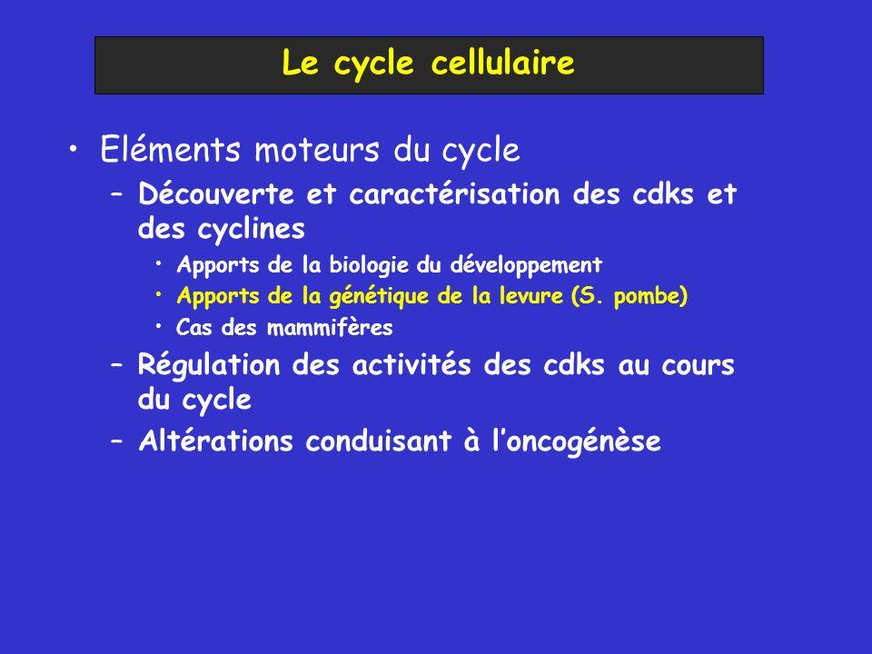 Eléments moteurs du cycle