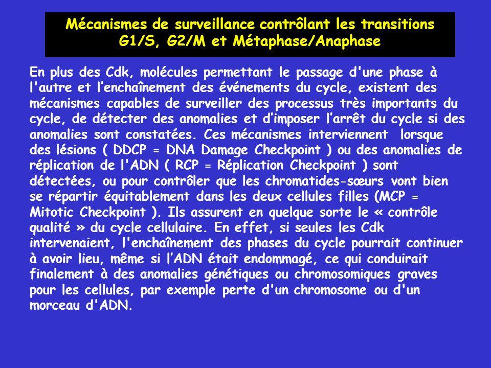 Mécanismes de surveillance contrôlant les transitions G1/S, G2/M et Métaphase/Anaphase