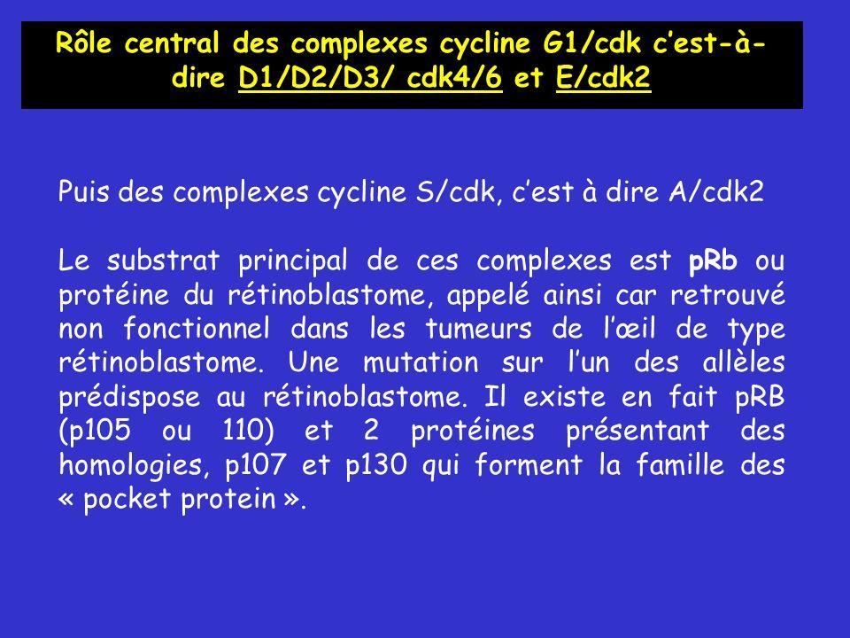 Rôle central des complexes cycline G1/cdk c'est-à-dire D1/D2/D3/ cdk4/6 et E/cdk2