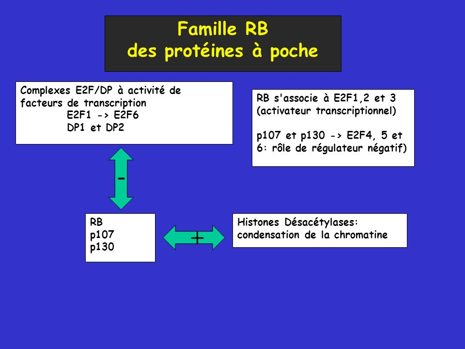 - + Famille RB des protéines à poche