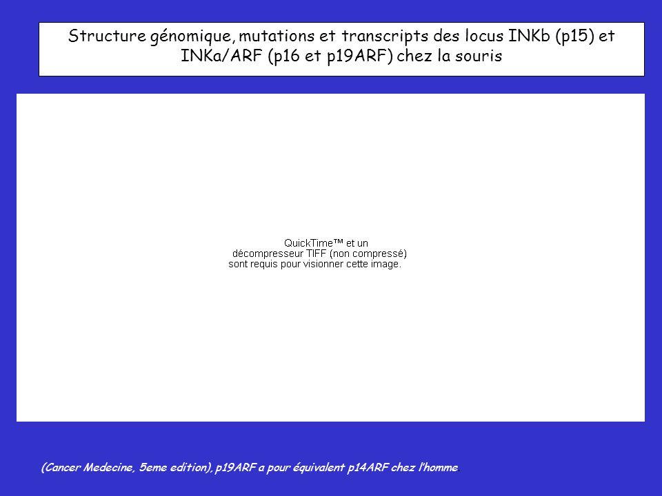 Structure génomique, mutations et transcripts des locus INKb (p15) et INKa/ARF (p16 et p19ARF) chez la souris