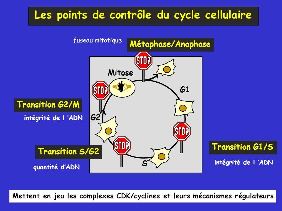 Les points de contrôle du cycle cellulaire