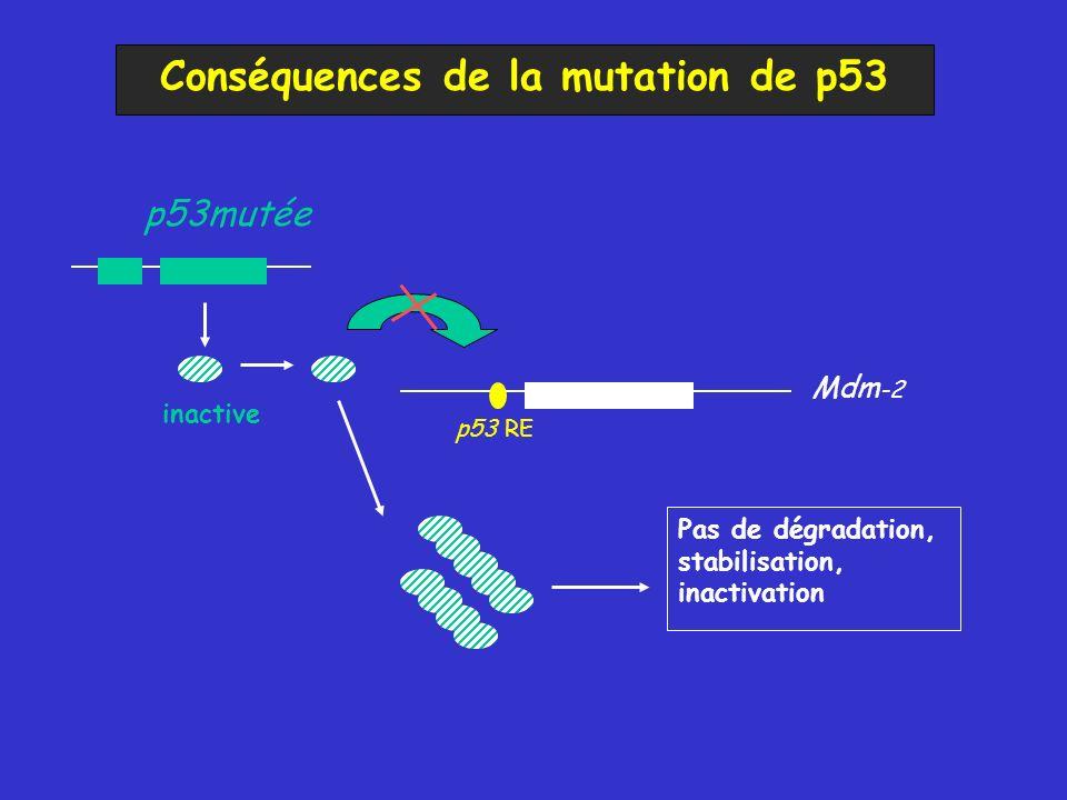 Conséquences de la mutation de p53