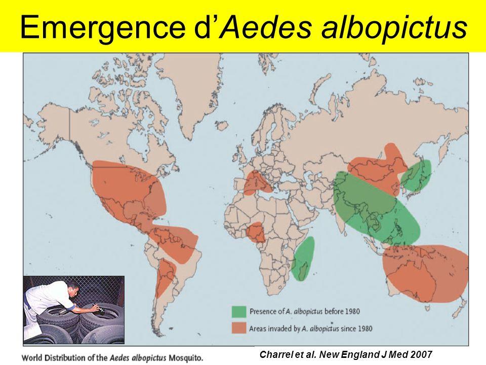 Emergence d'Aedes albopictus