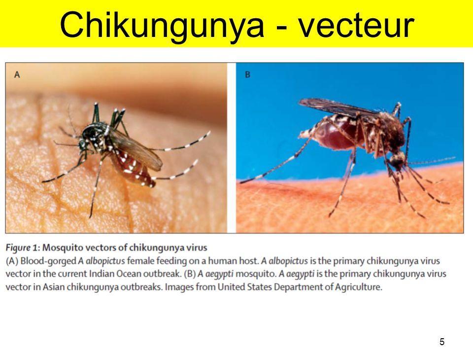 Chikungunya - vecteur