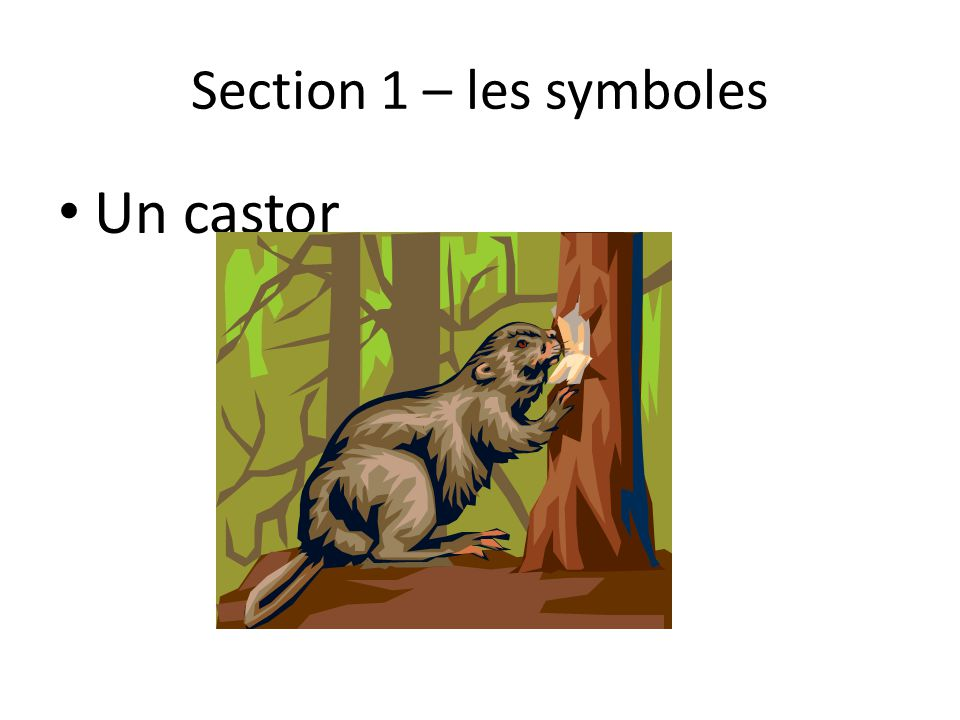 Section 1 – les symboles Un castor
