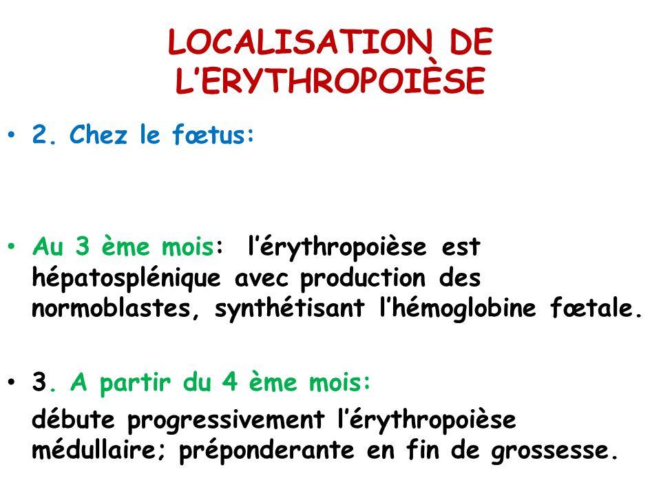 LOCALISATION DE L'ERYTHROPOIÈSE