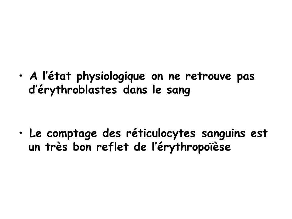 • A l'état physiologique on ne retrouve pas d'érythroblastes dans le sang