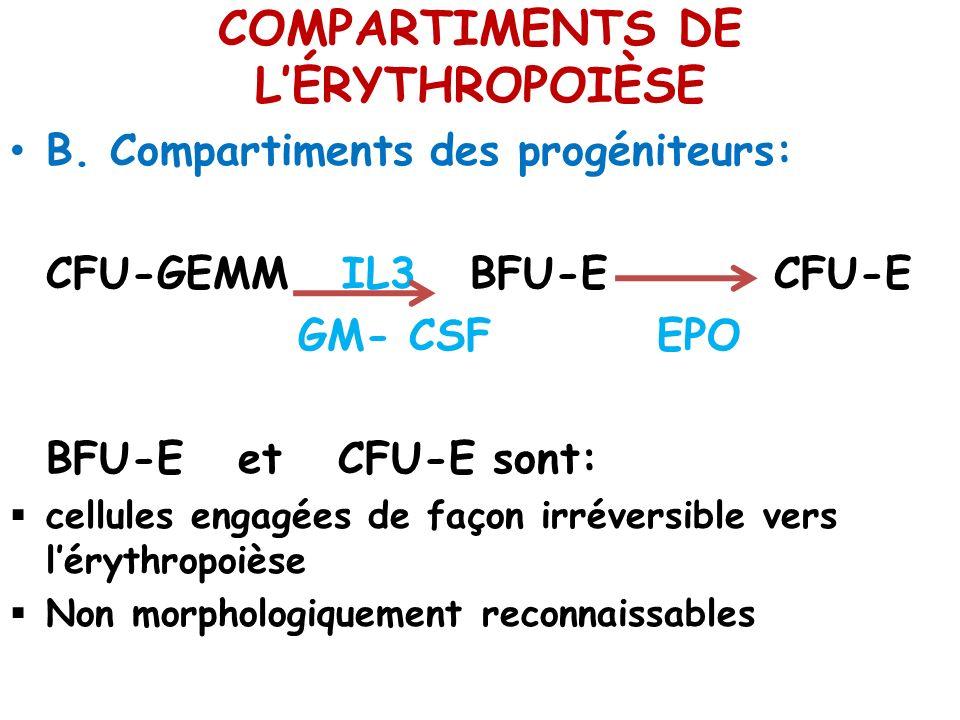COMPARTIMENTS DE L'ÉRYTHROPOIÈSE