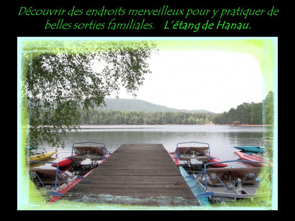 Découvrir des endroits merveilleux pour y pratiquer de belles sorties familiales. L'étang de Hanau.