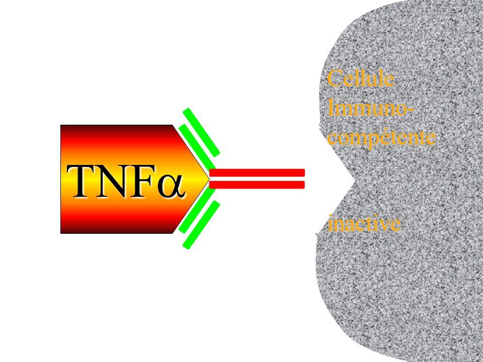 cellule inactive Cellule Immuno- compétente inactive TNFa