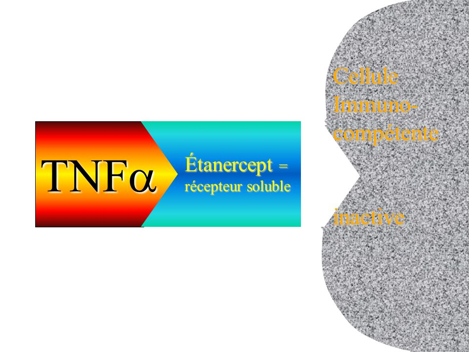 TNFa cellule inactive Cellule Immuno- compétente inactive Étanercept =