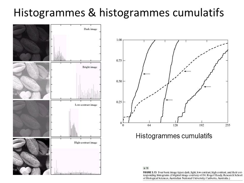 Histogrammes & histogrammes cumulatifs