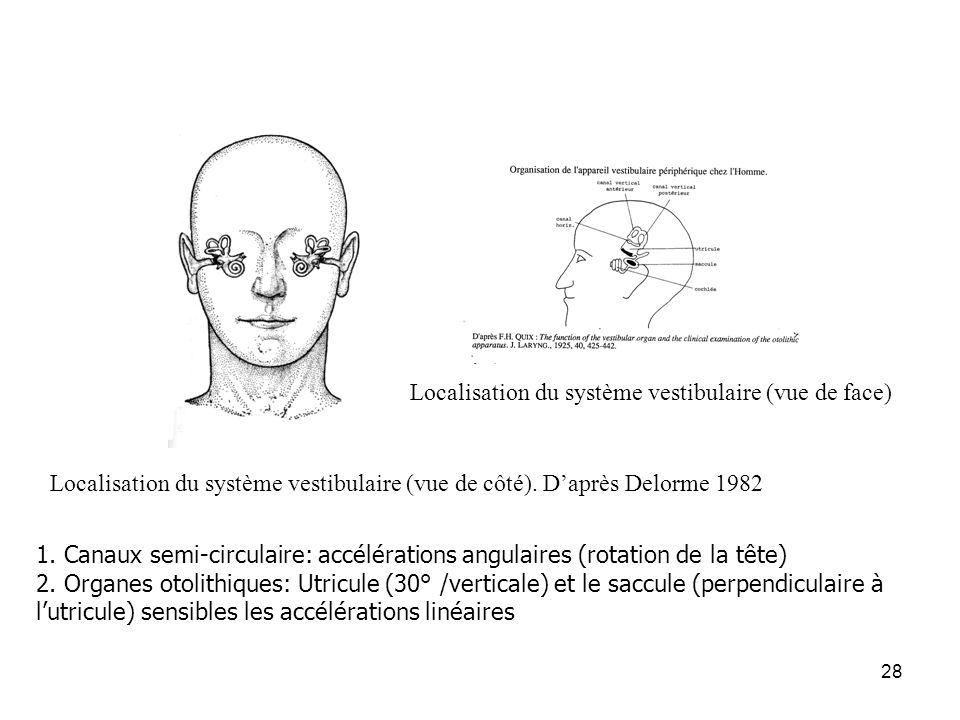 Localisation du système vestibulaire (vue de face)