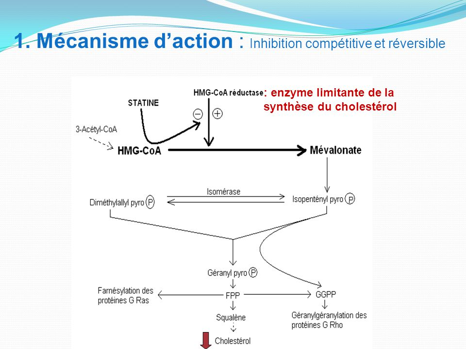 1. Mécanisme d'action : Inhibition compétitive et réversible
