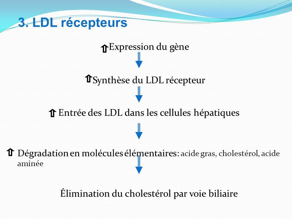 3. LDL récepteurs Expression du gène Synthèse du LDL récepteur