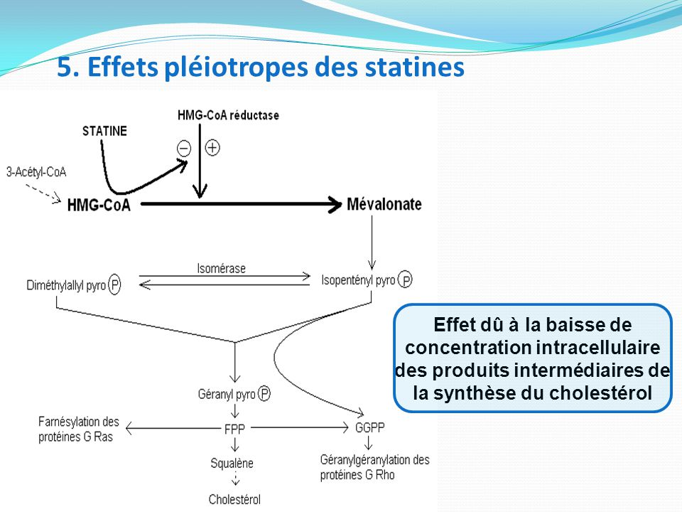 5. Effets pléiotropes des statines