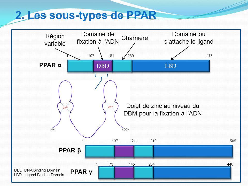 2. Les sous-types de PPAR Domaine de fixation à l'ADN
