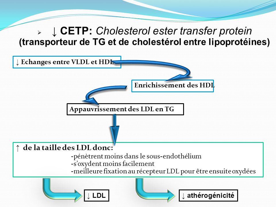 ↓ CETP: Cholesterol ester transfer protein (transporteur de TG et de cholestérol entre lipoprotéines)