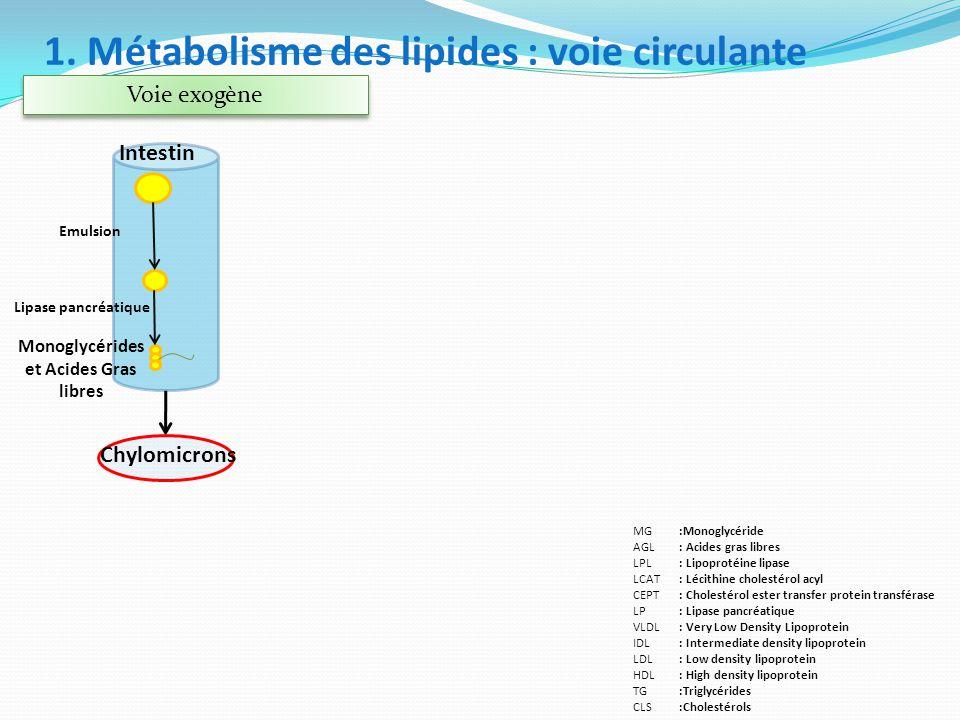 Monoglycérides et Acides Gras libres