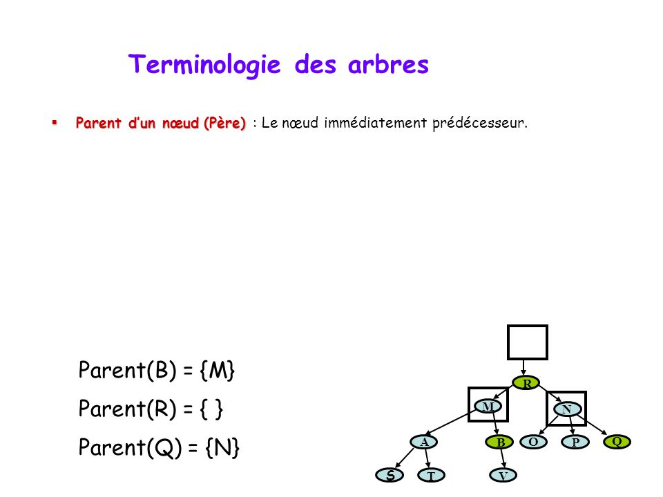 Terminologie des arbres