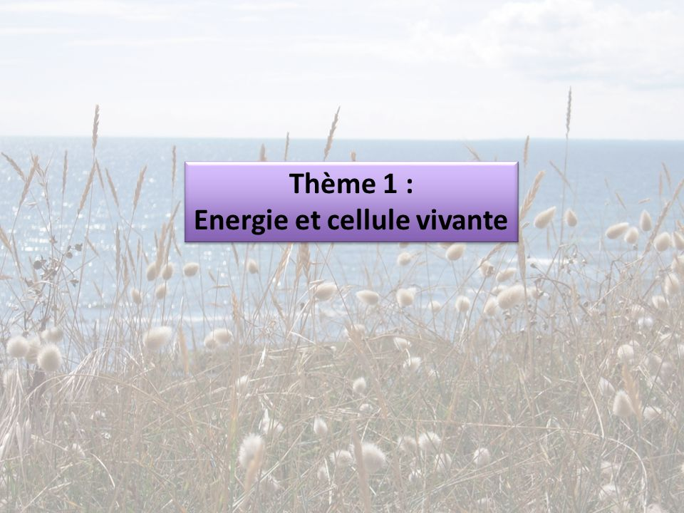 Energie et cellule vivante