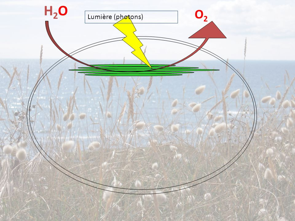 H2O O2 Lumière (photons)