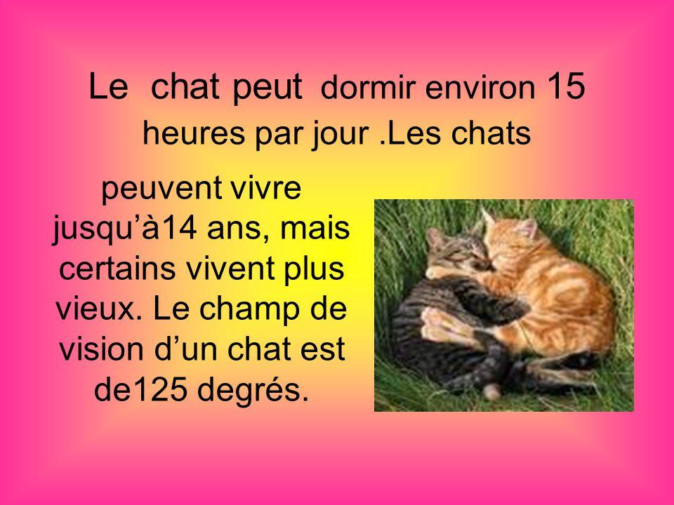 Le chat peut dormir environ 15 heures par jour .Les chats