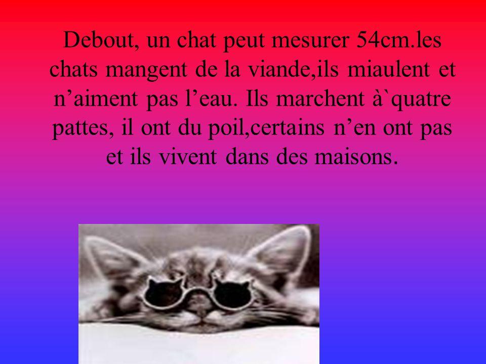 Debout, un chat peut mesurer 54cm