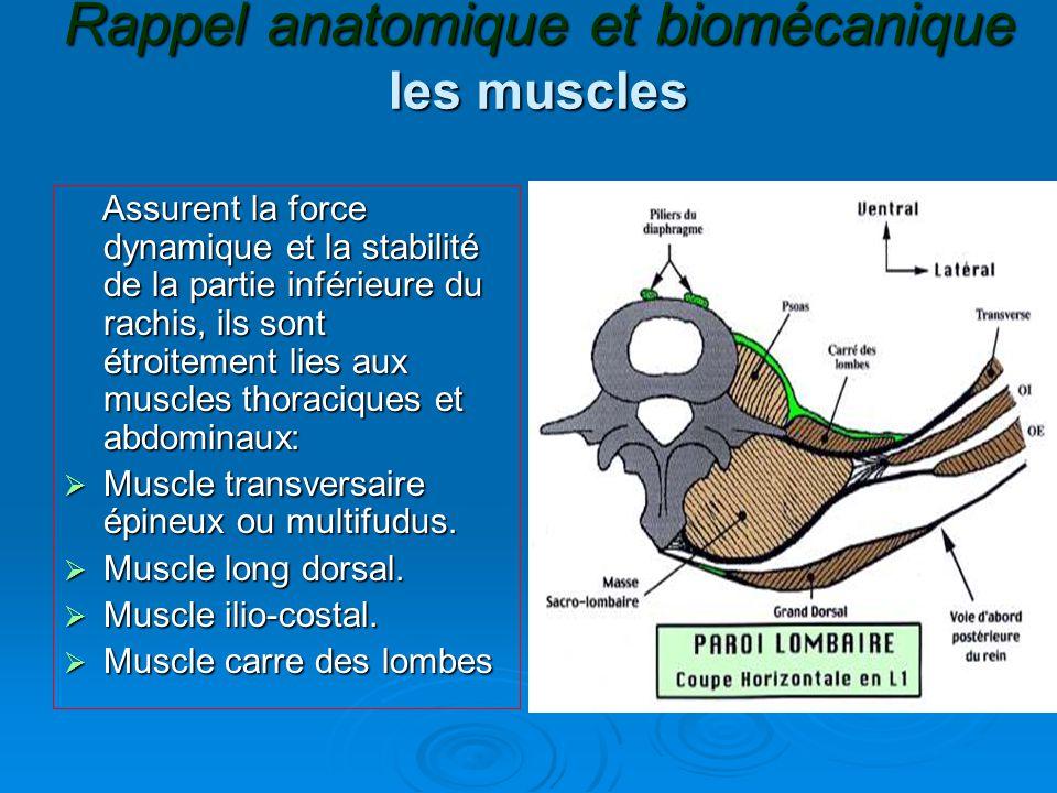 Rappel anatomique et biomécanique les muscles