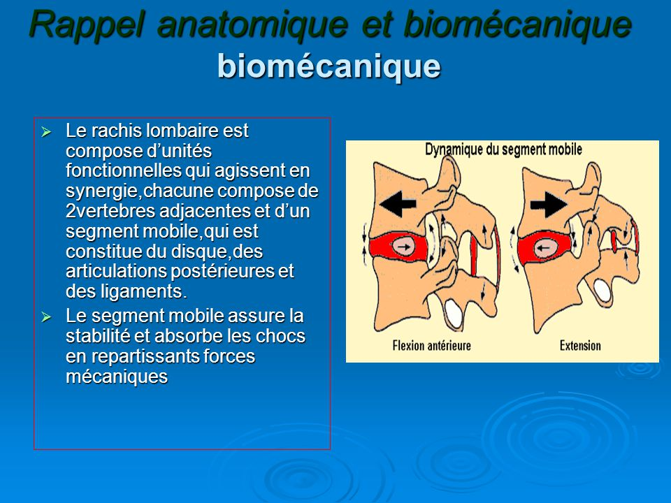 Rappel anatomique et biomécanique biomécanique