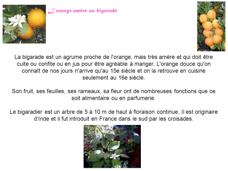 L'orange amère ou bigarade
