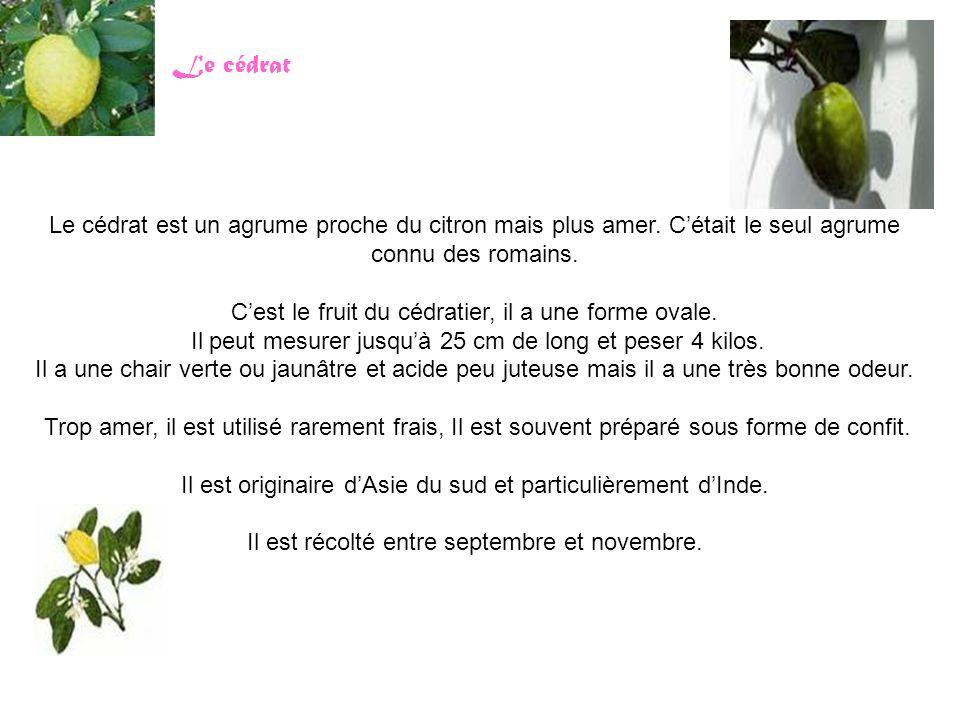 Le cédrat Le cédrat est un agrume proche du citron mais plus amer. C'était le seul agrume connu des romains.