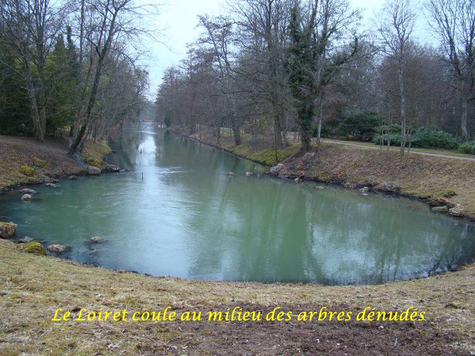 Le Loiret coule au milieu des arbres dénudés