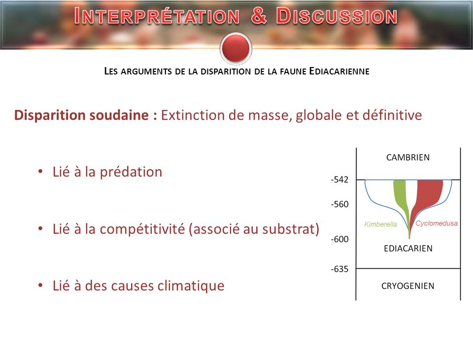 Interprétation & Discussion