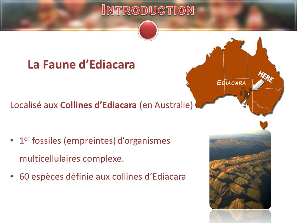 Introduction La Faune d'Ediacara