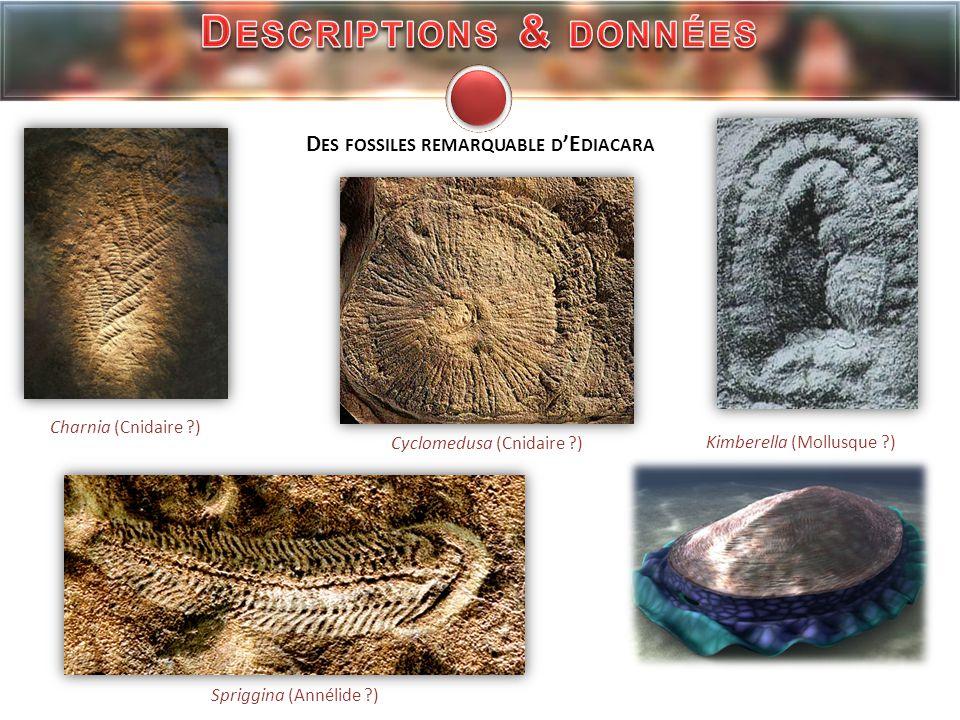 Descriptions & données Des fossiles remarquable d'Ediacara