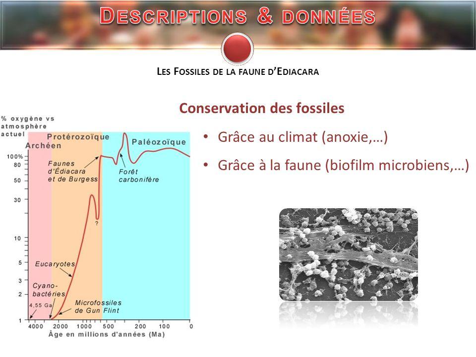 Descriptions & données Les Fossiles de la faune d'Ediacara