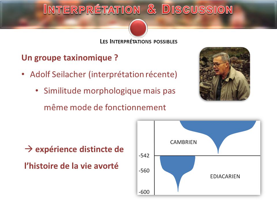 Interprétation & Discussion Les Interprétations possibles