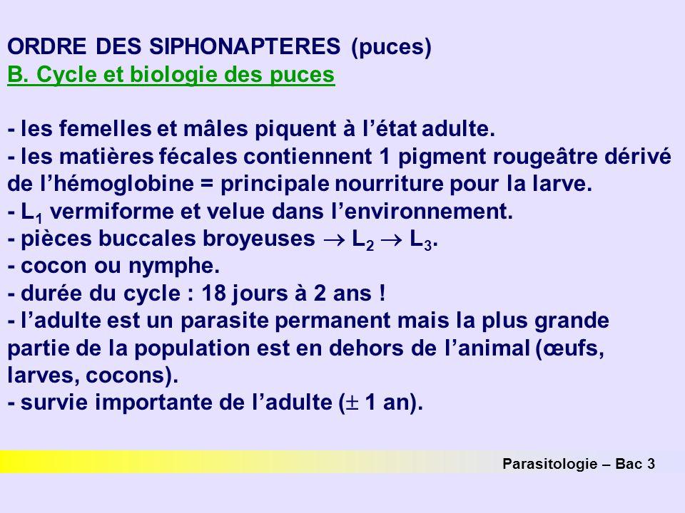 ORDRE DES SIPHONAPTERES (puces) B. Cycle et biologie des puces