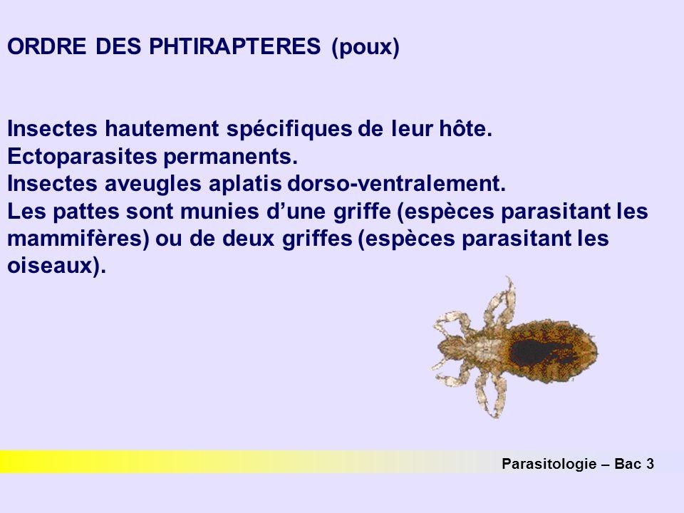 ORDRE DES PHTIRAPTERES (poux)