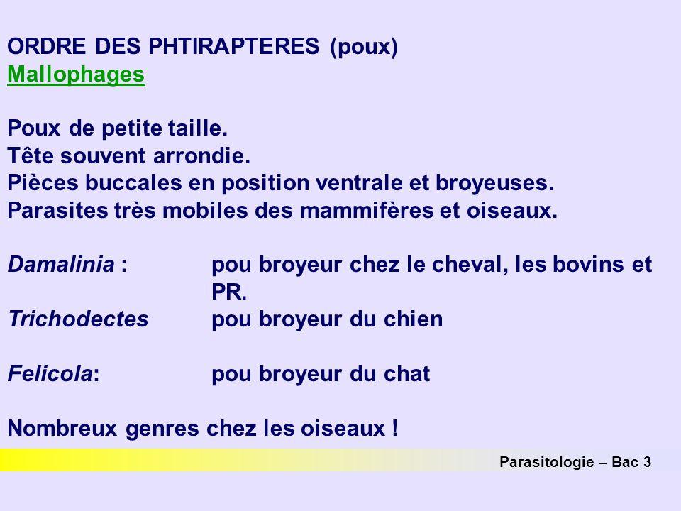 ORDRE DES PHTIRAPTERES (poux) Mallophages Poux de petite taille.