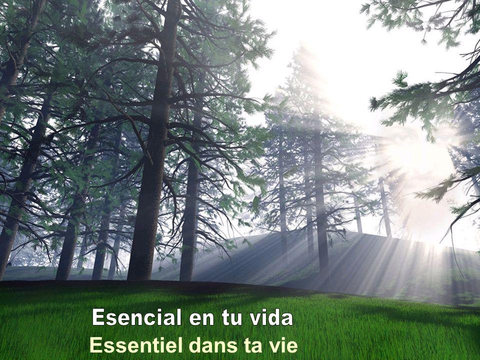 Esencial en tu vida Essentiel dans ta vie