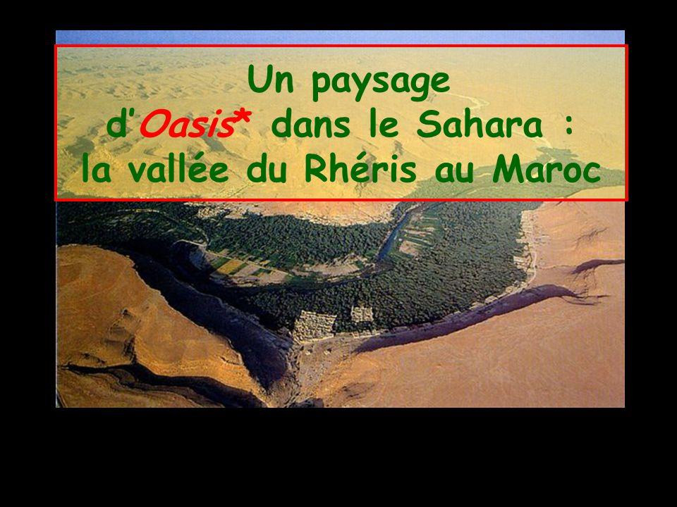 Un paysage d'Oasis* dans le Sahara : la vallée du Rhéris au Maroc