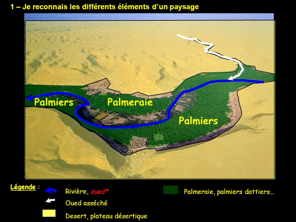 Palmiers Palmeraie Palmiers