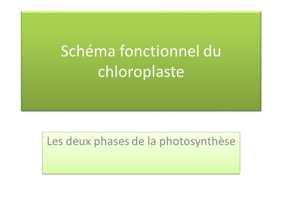 Schéma fonctionnel du chloroplaste
