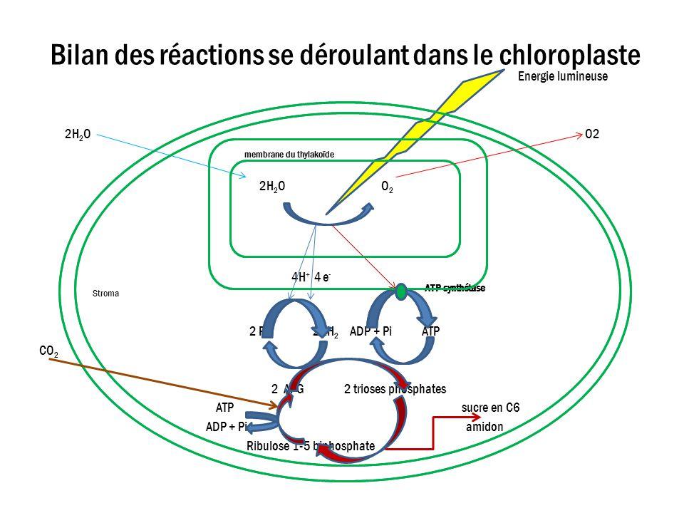 Bilan des réactions se déroulant dans le chloroplaste