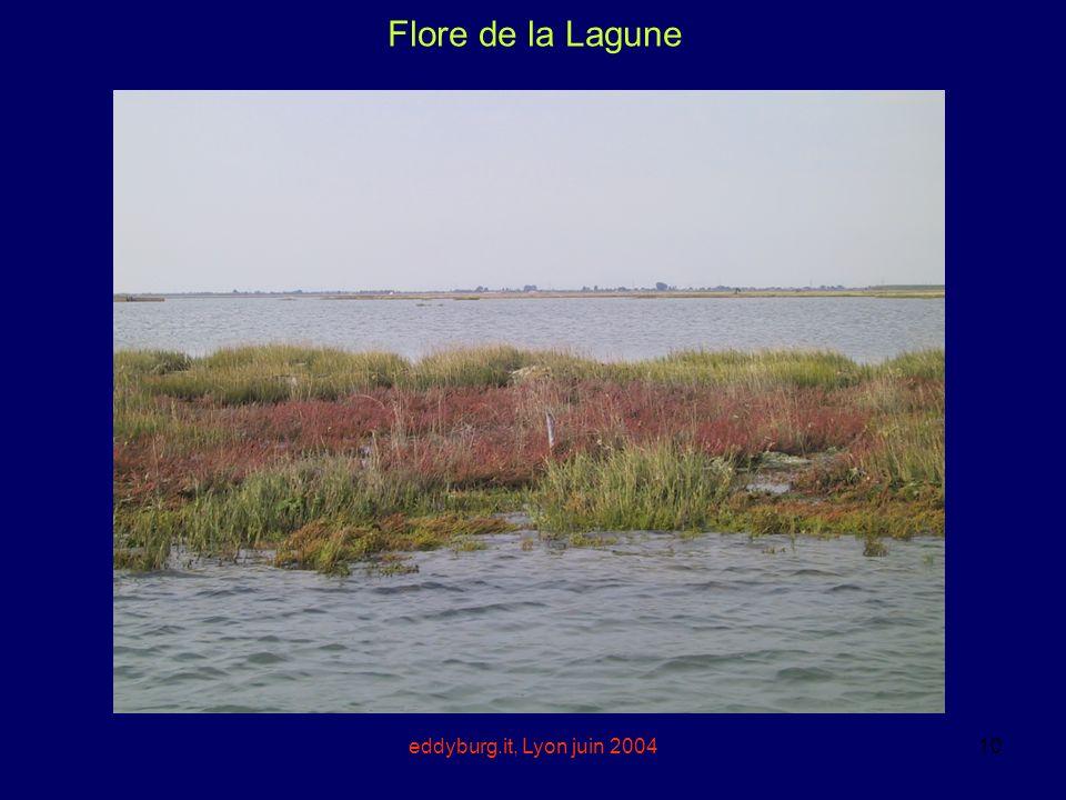 Flore de la Lagune eddyburg.it, Lyon juin 2004