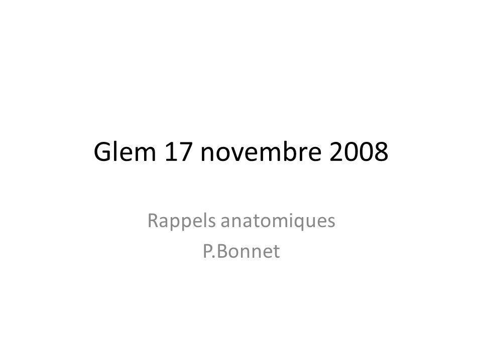 Rappels anatomiques P.Bonnet